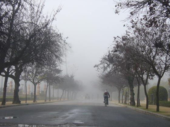 El Parque de María Luisa recuperando su paisaje habitual.  Foto: Juan Carlos Muñoz