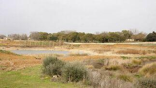 Vista de parte del lago con nuevas plantaciones mediterráneas.  Foto: Victoria Hidalgo