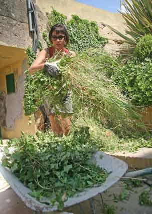 La poda de la hiedra es algo común en estos jardines.  Foto: Belén Vargas