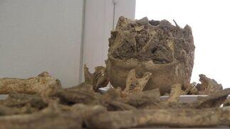Esqueletos humanos hallados durante la restauración de la iglesia de San Luis de los Franceses.  Foto: Victoria Hidalgo