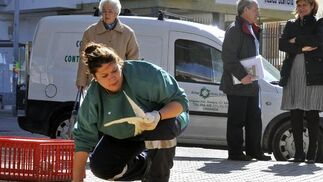 El Ayuntamiento atrapa 500 palomas con el nuevo sistema de cañón de redes.  Foto: Juan Carlos Vázquez