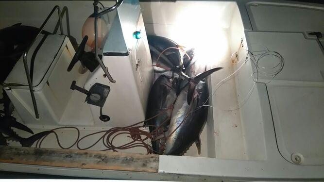 Ejemplares de atunes pescados ilegalmente en un barco en Algeciras.