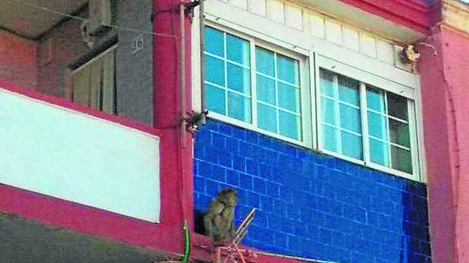 El mono, en una cornisa de los pisos de caracol de La Atunara.