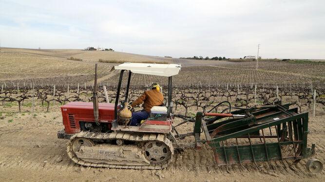Un trabajador de una viña trabaja sobre la tierra de una vereda.