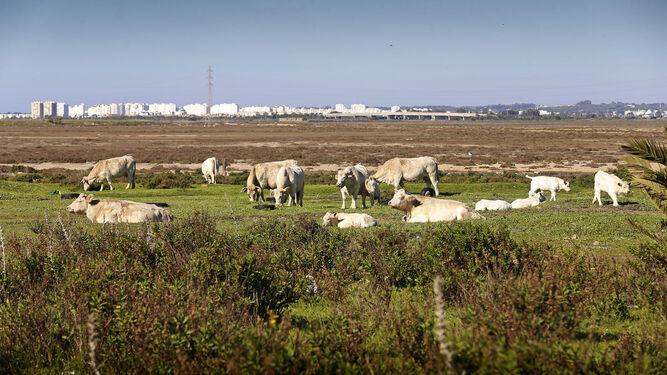 Terrenos en los que estaba previsto levantar el polígono de Las Aletas, en Puerto Real.