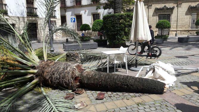 La palmera, en el suelo de la plaza del Progreso