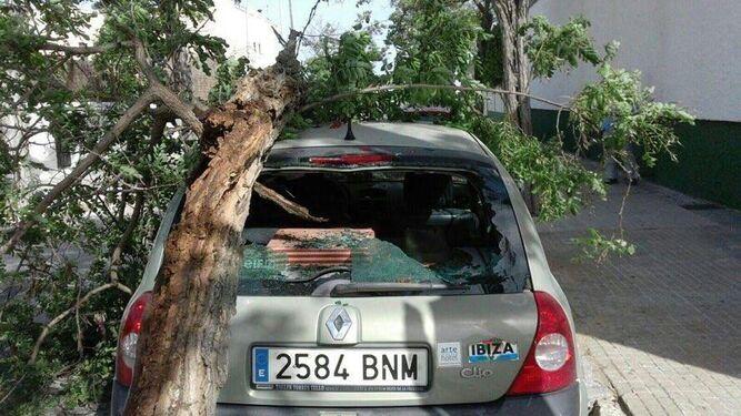 Un vehículo con daños por la caída de un árbol a causa del viento junto al Polideportivo de Sanlúcar.
