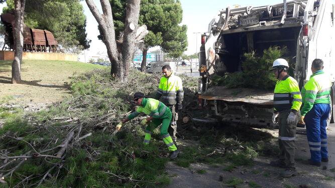 Varios trabajadores de Urbaser recogiendo algunas ramas.