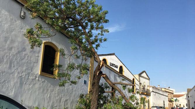 Uno de los árboles caídos, en la calle Clavel.
