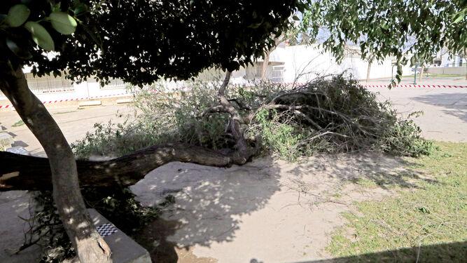 Uno de los árboles caídos por la zona de La Granja.