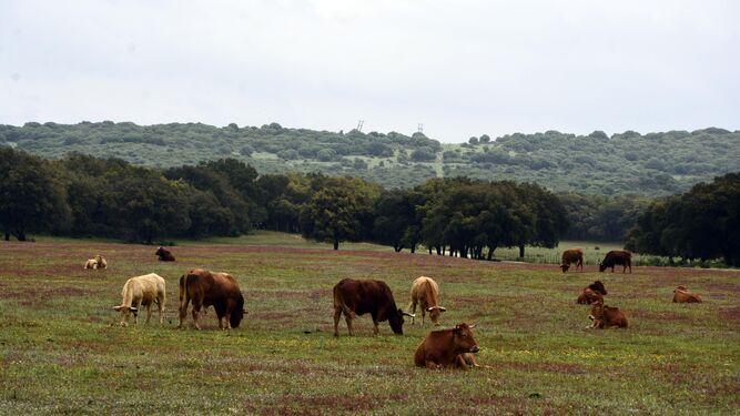 1. Un sendero informativo en la finca de Valdeinfierno, en Los Barrios.  2. Un rebaño de vacas en  Marajambú, en el municipio de Castellar. 3. La carretera que llega hasta las instalaciones recreativas de la Finca La Alcaidesa, en San Roque.