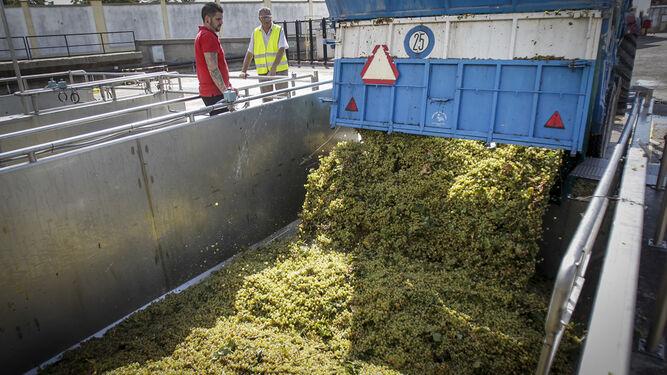 1. Manuel Valcárcel (derecha) junto a un operario controlan la descarga de los granos de uva en la tolva de un camión procedente del pago de Macharnudo. 2. Imagen de la planta de fermentación con cubos metálicos rellenos de mosto.    3. Foto detallada del instante en el que la uva se traslada del vehículo a la cuba.
