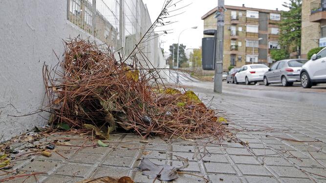 Una imagen de la suciedad existente justo a la entrada del colegio