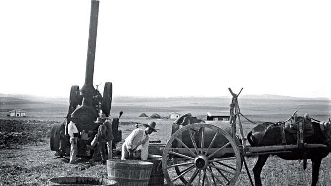 Campiña de Jerez hacia 1920 (Francisco Lozano Romero)