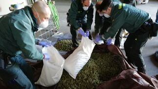 Las imágenes de la plantación de marihuana