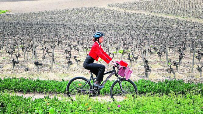 Una azafata de Tío Pepe pasea en bicicleta por una viña de la bodega.
